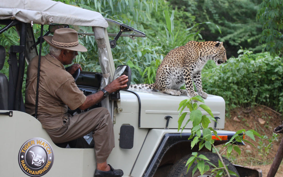 Fateh Singh Rathore: A Human Tiger