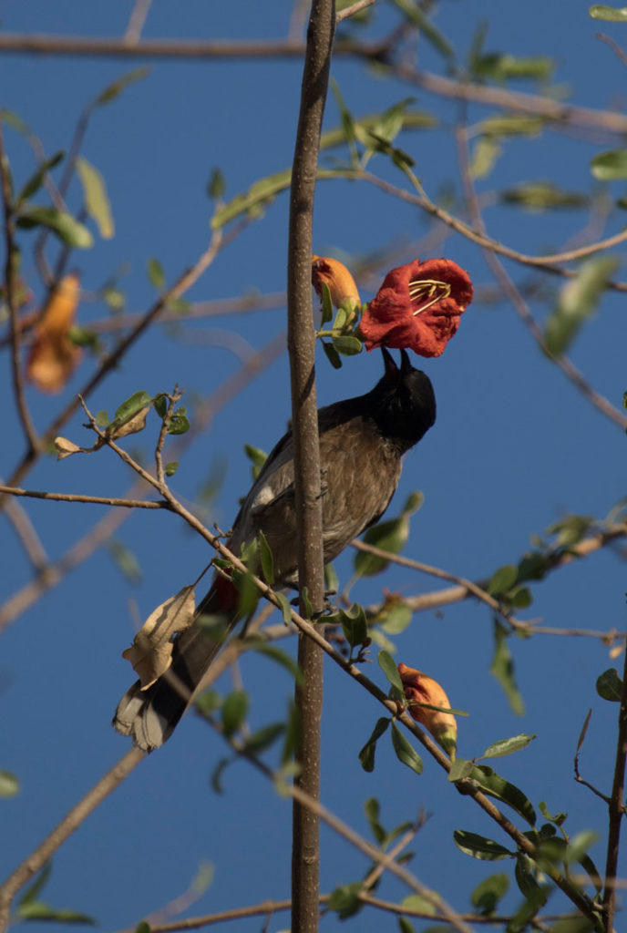 Birds have a very significant role in the process of polination of Rohida  flower