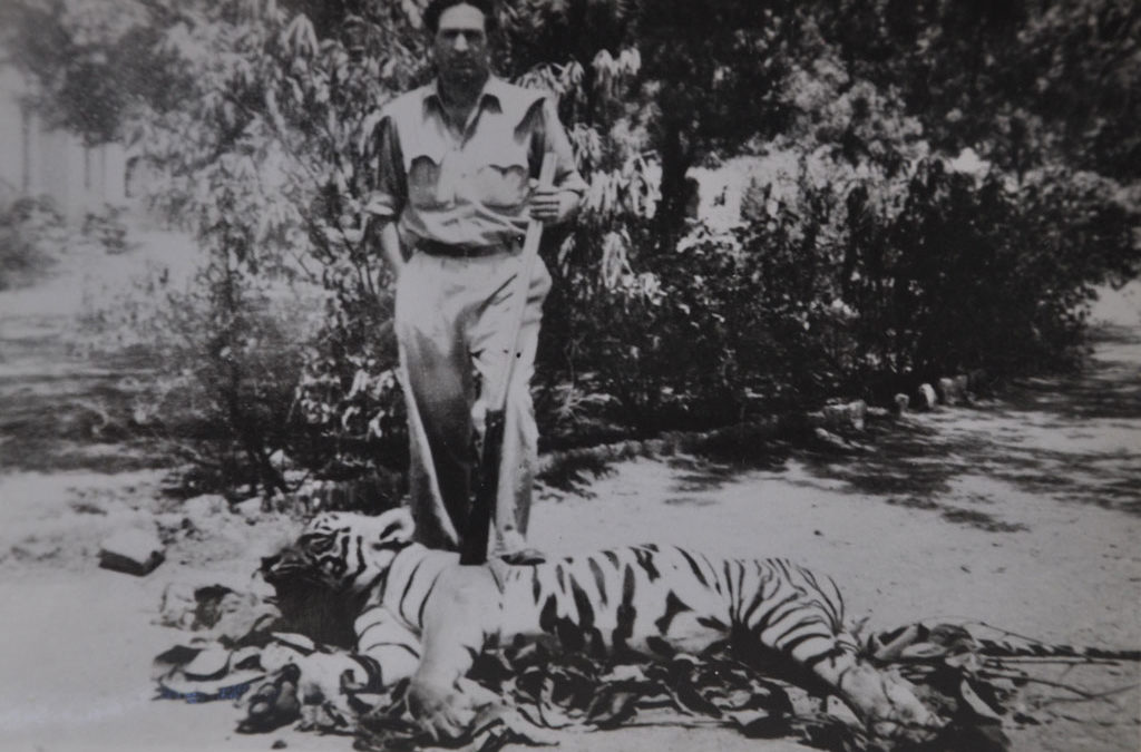 Kailash Sankhala:TIGER! The Story Of The Indian Tiger