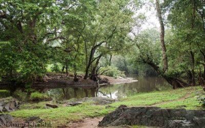 सीतामाता वन्यजीव अभयारण्य – राजस्थान के विशिष्ट वन्यजीवों का पवित्र उपवन