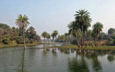 शेरगढ़ वन्यजीव अभयारण्य: ऐतिहासिक एवं प्राकृतिक धरोहर