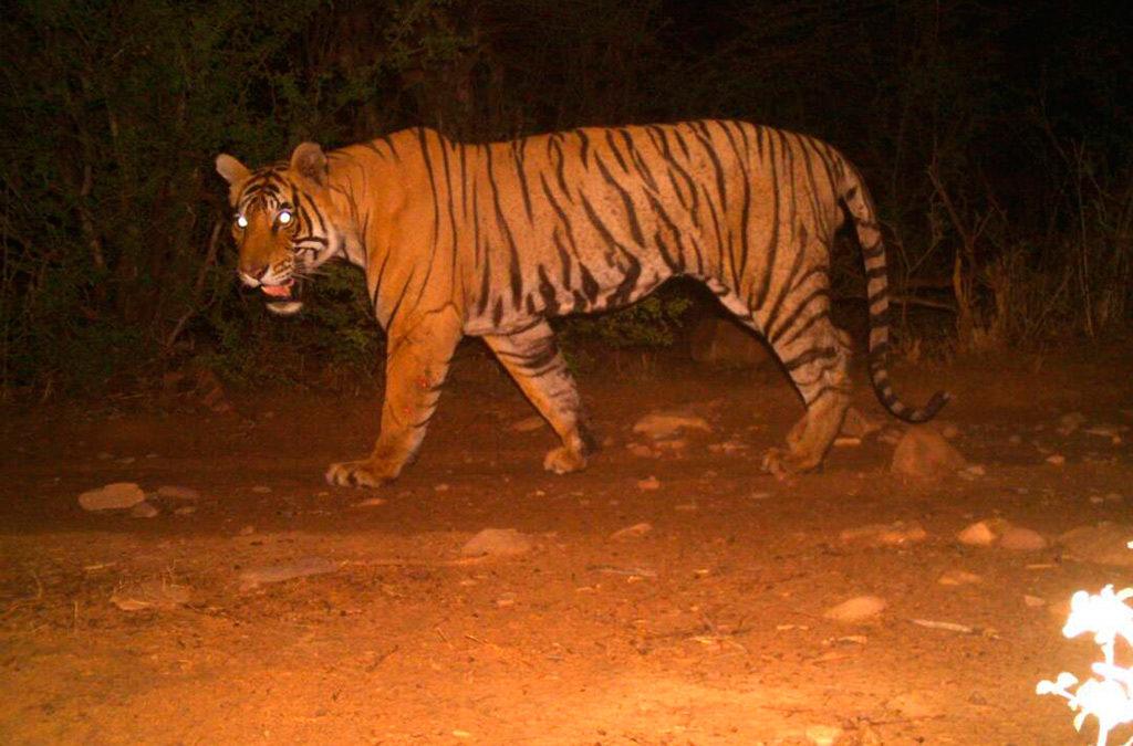 राजस्थान की प्रथम कैमरा ट्रैप फोटो