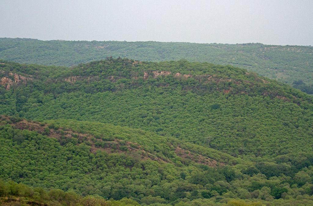 अरावली की आभा: मामेर से आमेर तक