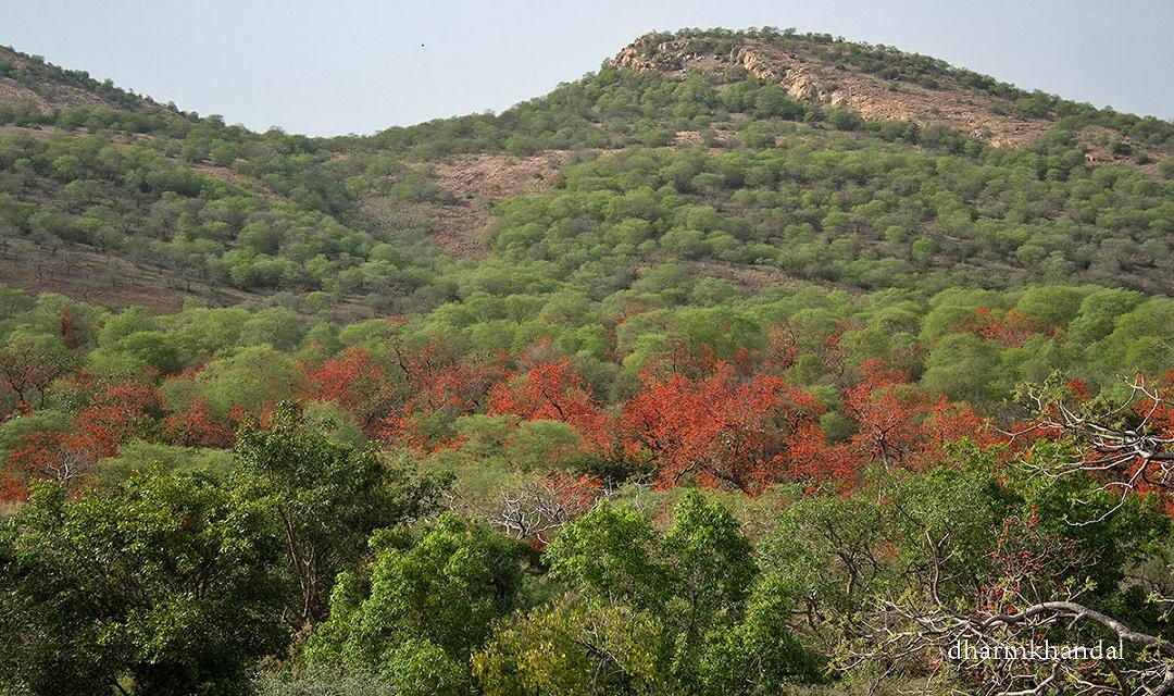 अरावली के सूंदर एवं महत्वपूर्ण वृक्ष