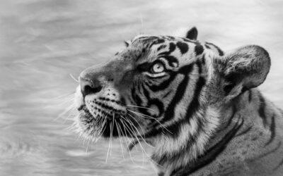राजस्थान वन विभाग के लेखकों द्वारा वन एवं वन्यजीवों संबंधी साहित्य सृजन में योगदान