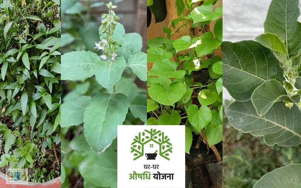 घर-घर औषधि योजना: आमजन के स्वास्थ्य के लिए सरकार की एक पहल